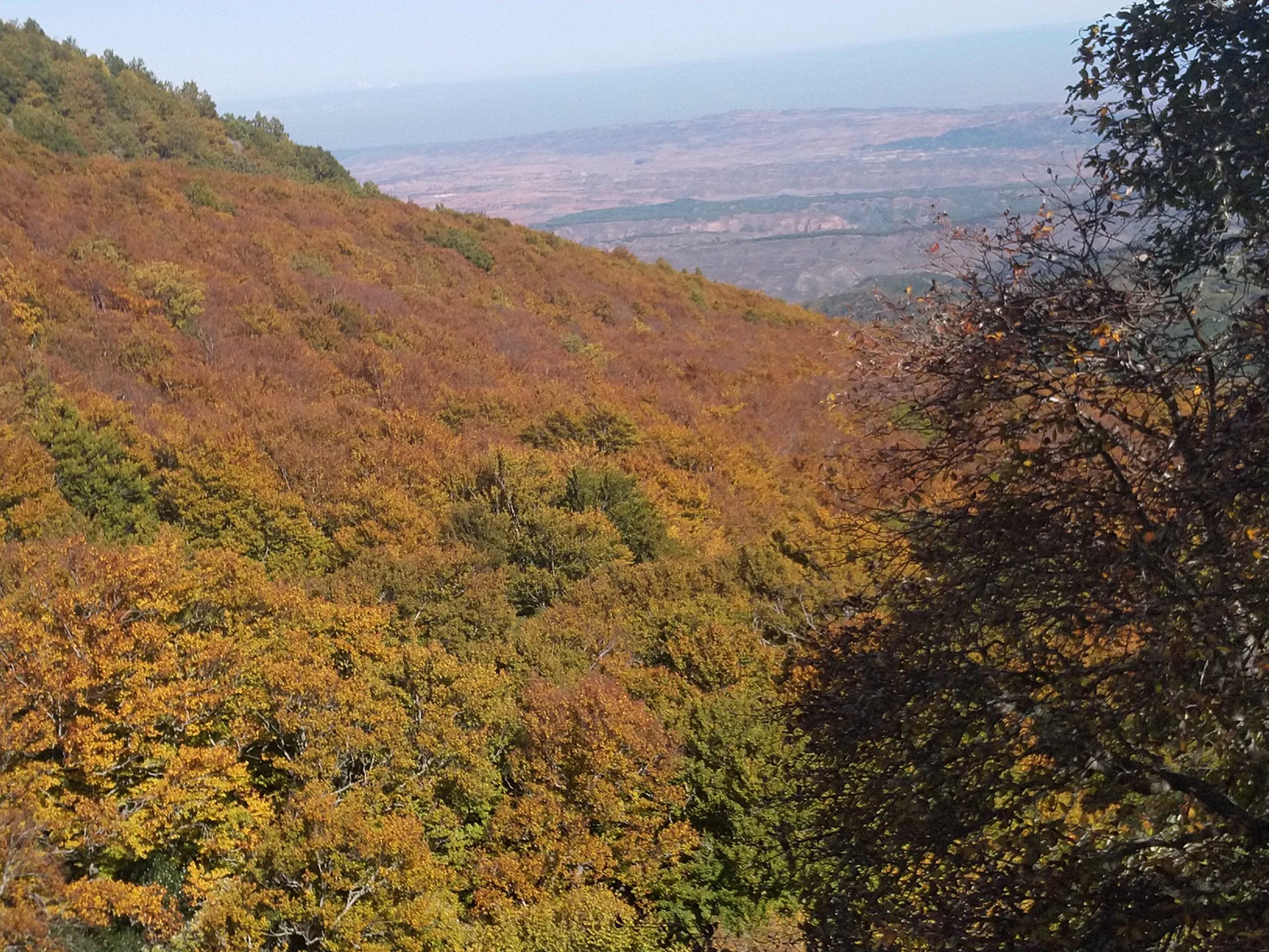 Hayedo de Peña Roya – Parque Natural del Moncayo 2