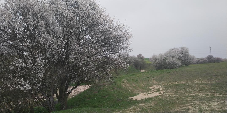 Camino de la Alcantarilla 1