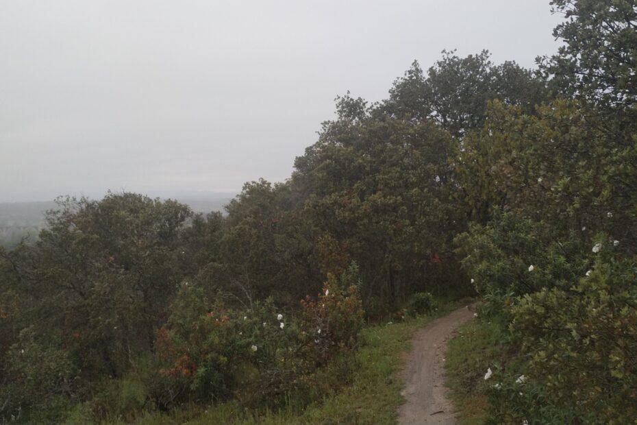 Monte de El Pardo 1