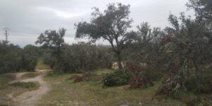 Monte de El Pardo 2