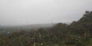 Monte de El Pardo 3