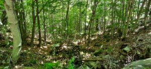 Pinar y hayedo del Río Razón 2