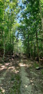 Pinar y hayedo del Río Razón 3